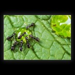Ants on leaf closeup Macro green ant's photo photograph picture