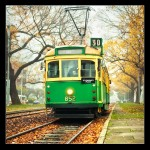 Melbourne old Tram Autumn Yellow leaves mist